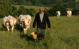 Застраховане на селскостопански животни